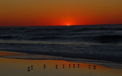 Seagulls on the beach at dusk wallpaper