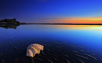 Seashell in the evening lights wallpaper