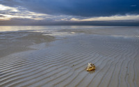 Shell on the empty beach wallpaper 1920x1200 jpg