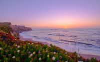 Sunset above a coast filled with colorful flowers wallpaper 2560x1600 jpg