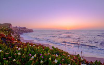 Sunset above a coast filled with colorful flowers Wallpaper