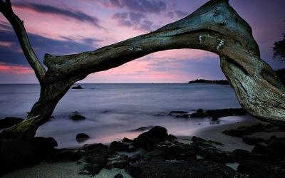 Tree forming an arch on the beach Wallpaper