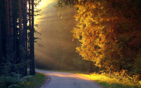 Road through bright autumn forest wallpaper 2560x1600 jpg