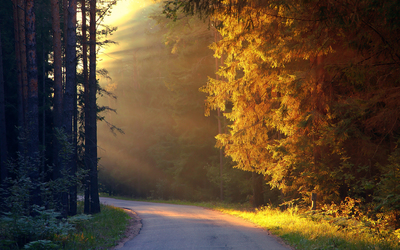 Road through bright autumn forest wallpaper