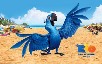 Blu - Rio wallpaper