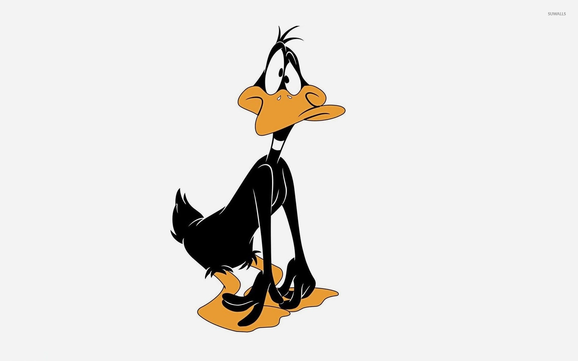 Sad And Surprised Daffy Duck Wallpaper Cartoon Wallpapers 48621
