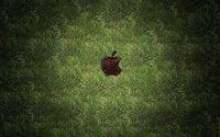 Apple [107] wallpaper 1920x1200 jpg