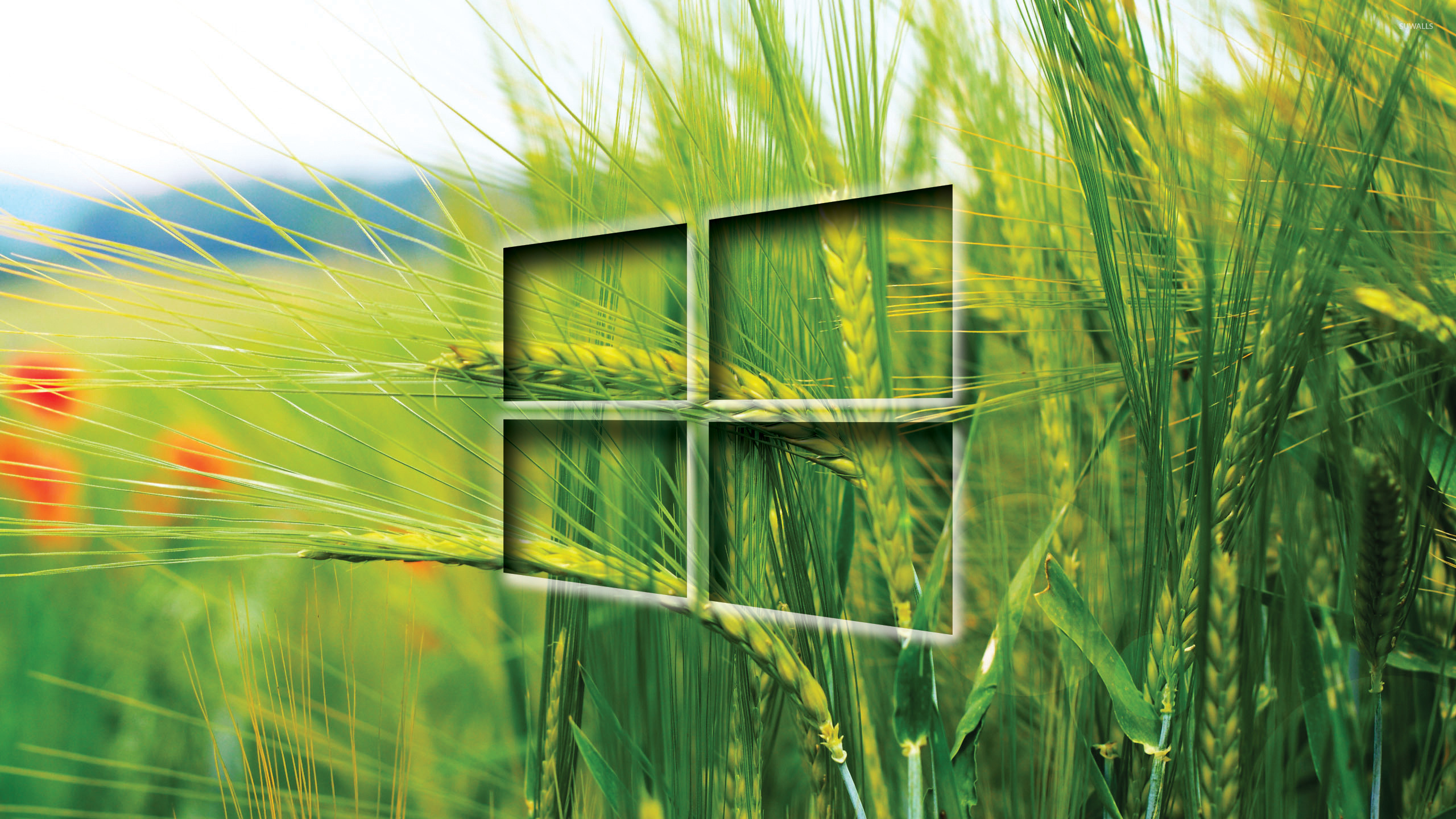 Windows 10 transparent logo on the wheat field wallpaper - Computer
