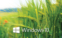 Windows 10 white text logo on the wheat field wallpaper 2560x1440 jpg