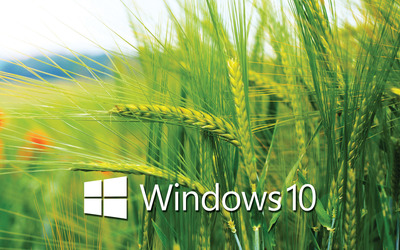 Windows 10 white text logo on the wheat field wallpaper