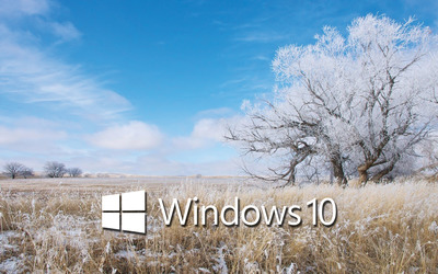 Windows 10 white text logo over the frosty field wallpaper