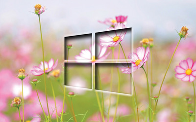 Windows 10 transparent logo on cosmos blossoms wallpaper