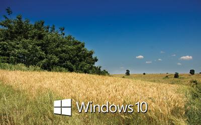 Windows 10 text logo on the wheat field wallpaper
