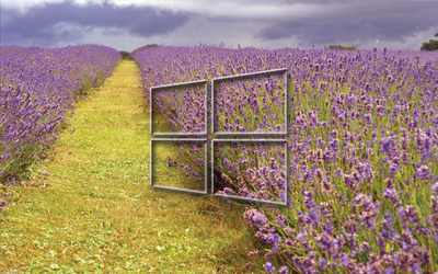 Windows 10 transparent logo on the lavender field wallpaper