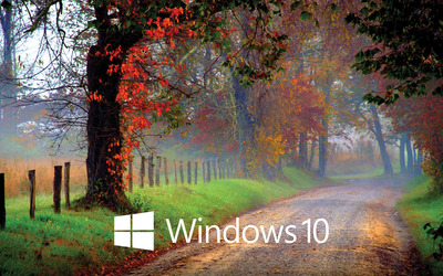 Windows 10 white text logo on the forest path wallpaper