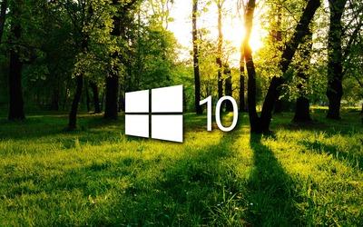 Windows 10 in the green forest white logo wallpaper
