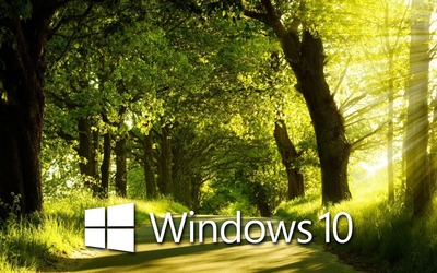 Windows 10 in the sunny forest [4] wallpaper