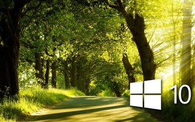 Windows 10 in the sunny forest wallpaper
