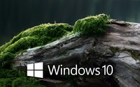 Windows 10 on a mossy log [3] wallpaper 1920x1080 jpg