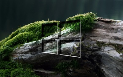 Windows 10 on a mossy log wallpaper
