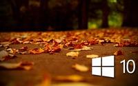 Windows 10 on autumn leaves [4] wallpaper 1920x1080 jpg