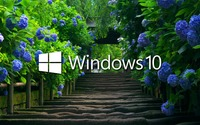 Windows 10 on blue hydrangeas wallpaper 1920x1080 jpg