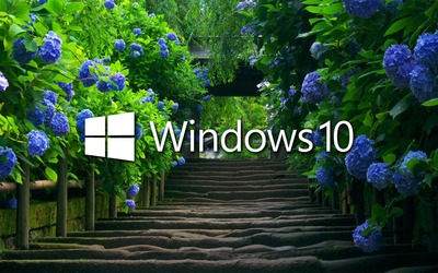 Windows 10 on blue hydrangeas wallpaper