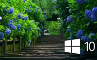Windows 10 on blue hydrangeas [3] wallpaper 1920x1080 jpg