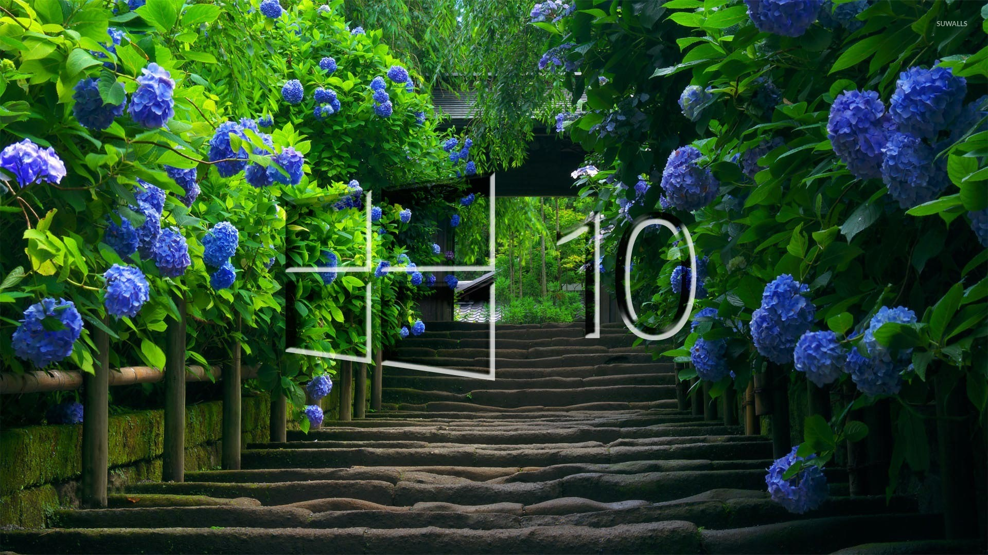 Windows 10 On Blue Hydrangeas [4] Wallpaper