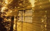 Windows 10 on sun rays in the forest glass logo wallpaper 1920x1080 jpg