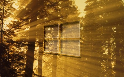 Windows 10 on sun rays in the forest glass logo wallpaper