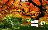 Windows 10 on the orange tree simple logo wallpaper 1920x1200 jpg