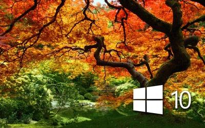 Windows 10 on the orange tree simple logo wallpaper