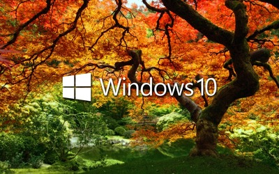 Windows 10 on the orange tree white text logo wallpaper