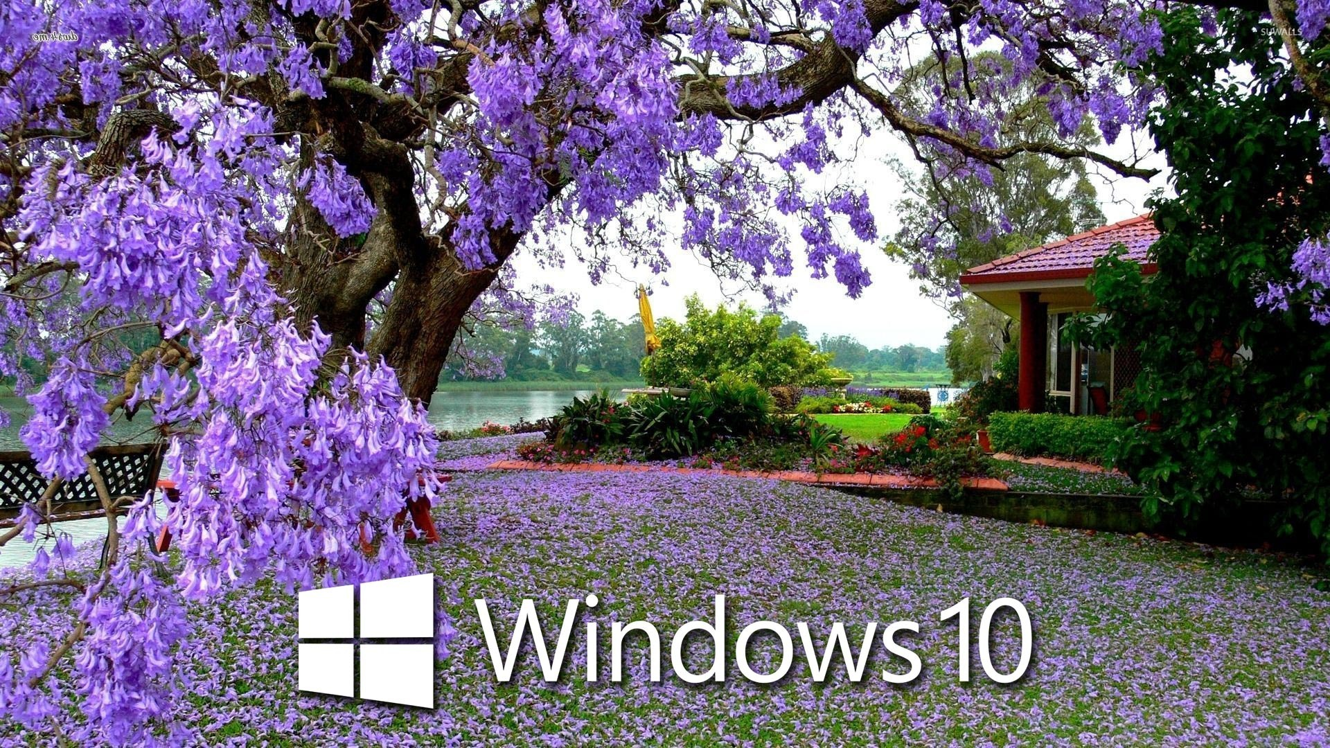 Windows 10 on the purple blossoms wallpaper - Computer wallpapers