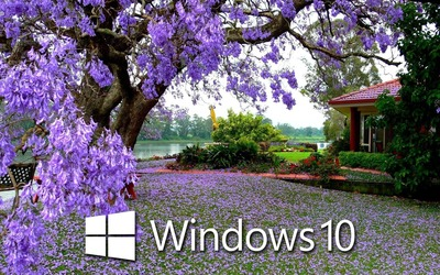 Windows 10 on the purple blossoms wallpaper