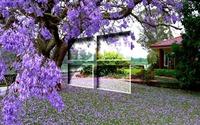 Windows 10 on the purple blossoms [3] wallpaper 1920x1080 jpg