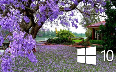 Windows 10 on the purple blossoms [2] Wallpaper