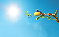 Angry birds sitting on the branch wallpaper 1920x1200 jpg