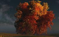 Autumn tree [4] wallpaper 1920x1080 jpg