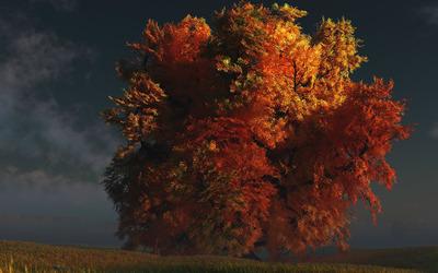 Autumn tree [4] wallpaper