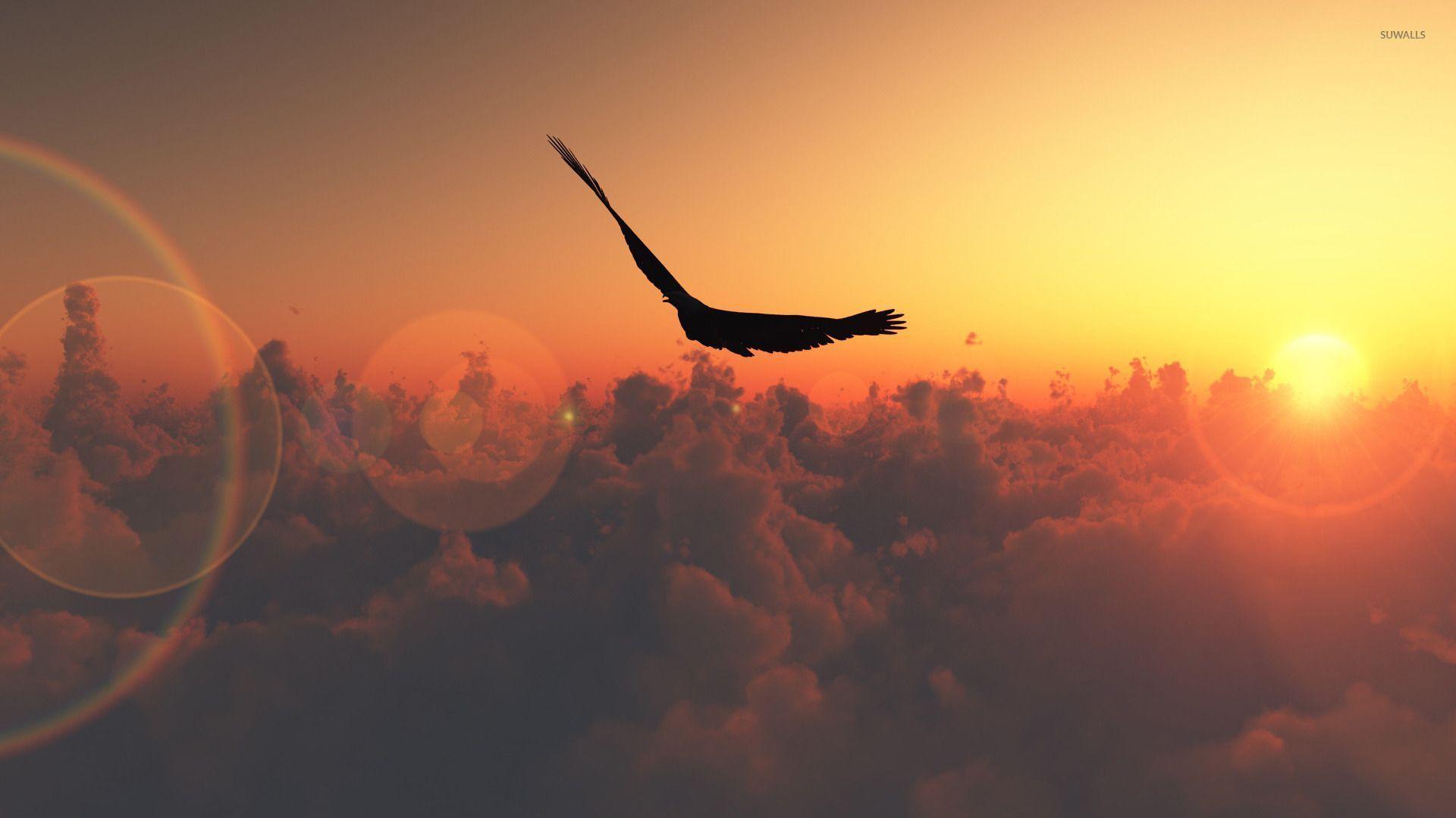 Bird flying in the sunset wallpaper - Digital Art ...