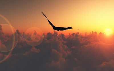 Bird flying in the sunset Wallpaper