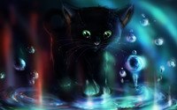 Black kitten playing in the puddle wallpaper 1920x1080 jpg