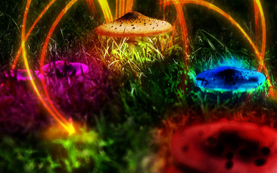 Colorful mushrooms [2] wallpaper