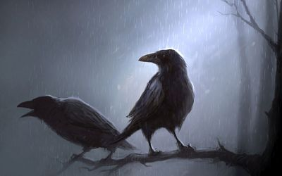 Crows standing in the rain on the branch wallpaper
