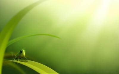 Cute grasshopper wallpaper