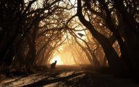 Dark forest wallpaper 1920x1080 jpg