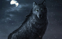 Dark wolf wallpaper 1920x1200 jpg