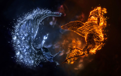 Elemental birds wallpaper